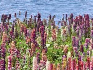 Плитка Flora