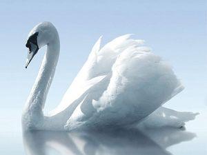 Плитка Porto Water and Swan